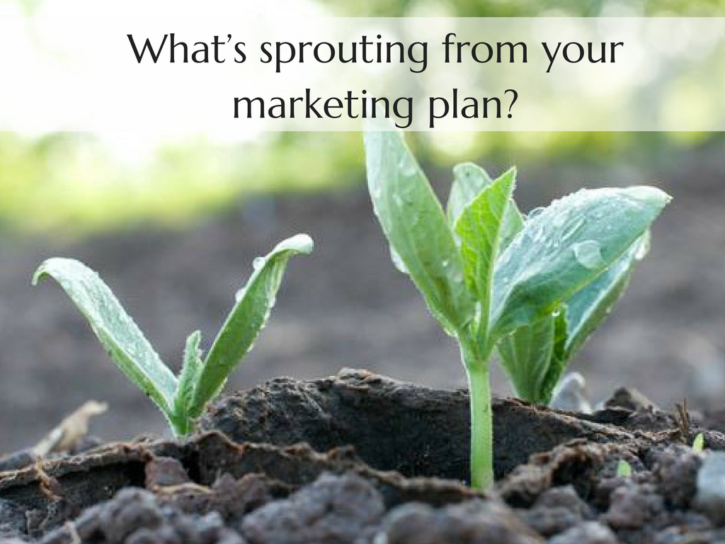 "image of a sprout with water droplets on it, the image also has text that says, ""What's sprouting from your marketing plan?"""